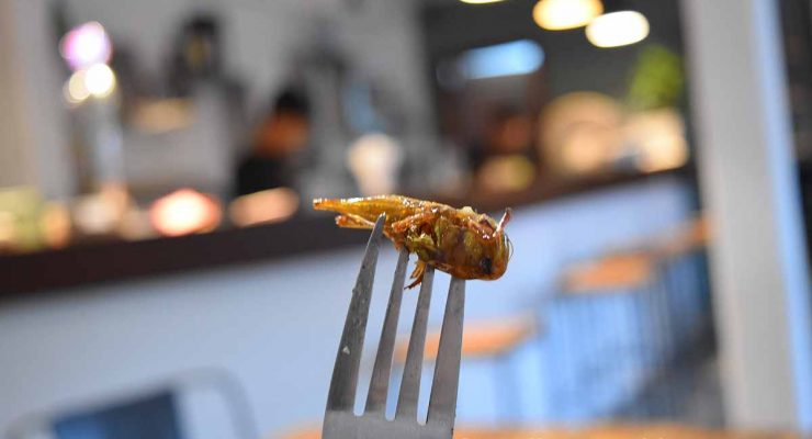 IMG - Bugs Cafe Siem Reap - Food blogger